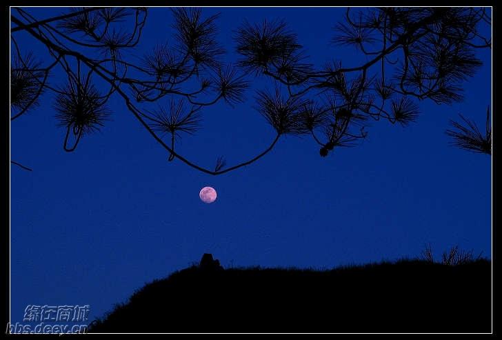 月亮代表我的心 古筝